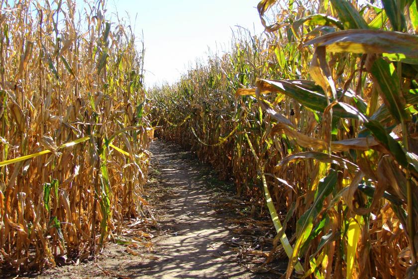 Labyrinthe de maïs à San Francisco