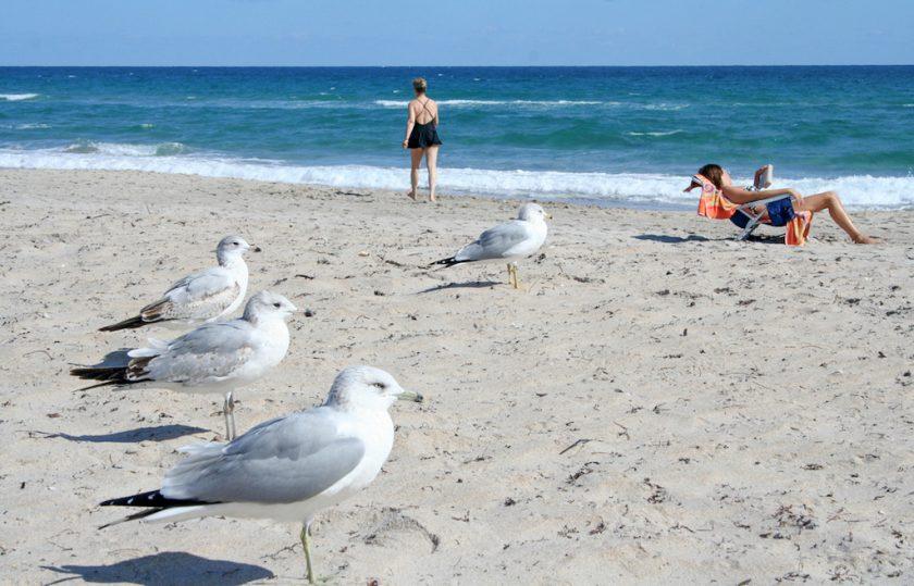 Delray beach les plus belles plages de Miami