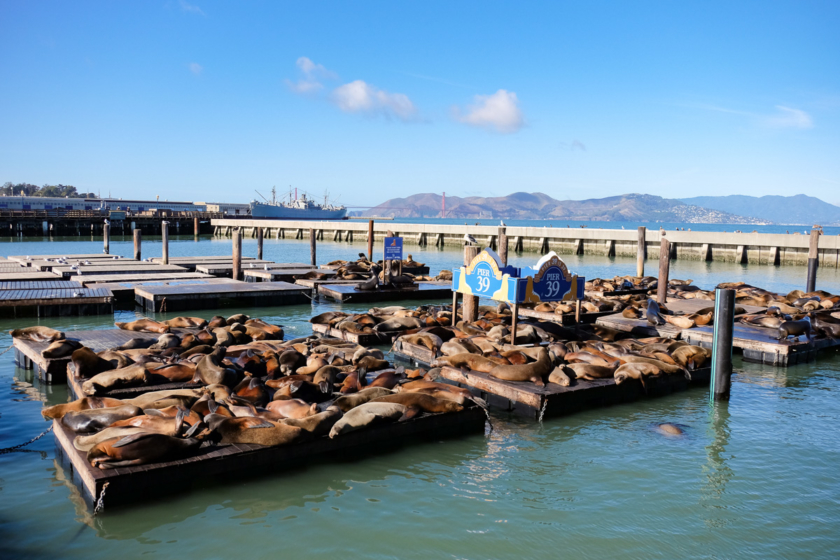 Fisherman's wharf 10 incontournables de visites à faire à et à voir à San Francisco